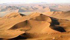 namib desert gecko - Google Search