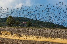 According to a new study, researchers used sound to protect crops from pesky birds. Researchers used speakers to produce a sonic shield by sending out a directional buzzing noise in order to keep birds away from farm fields and tall buildings.