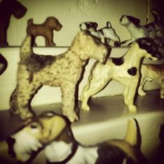 Terrier Collection    #terriers #Padgram