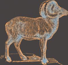 Eclipse Goat | China Rose