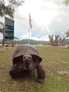 Seychelles. Curieuse Island. The Curieuse Marine National Park.