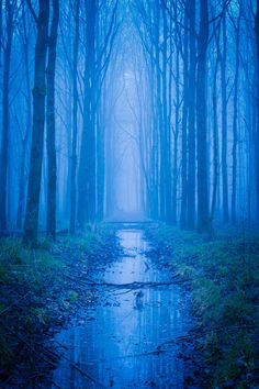 Magical forest (by Jonas Debosscher)