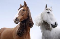 Curly #horse #mane extensions duitang.com