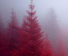 Red hideaway