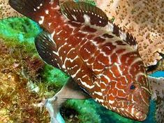 Resultado de imagem para mero peixe Merida, Fish, Pets, Animals, Gone Fishing, Physical Activities, Weather, Tips, Spear Fishing