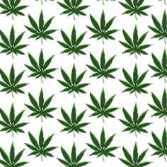 kushinthehead:  Marijuana