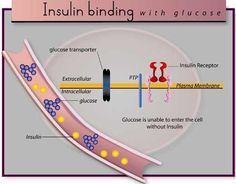 Diabetes Insipidus and Desmopressin * Want additional info? Click on the image.