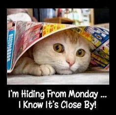 I'm Hiding From Monday.....I know It's Close By!