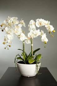 Resultado de imagen para flores bonitas y raras