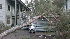 Puu on kaatunut myrskyssä pihaan Espoossa Ladder, Stairway, Ladders