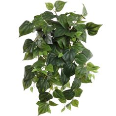 """24"""" Hanging Philodendron Ivy Plant"""