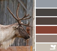 Caribou Color -  masculine