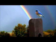 """Somewhere Over the Rainbow/What a Wonderful World"" - Israel Kamakawiwo'Ole with lyrics. Over the Rainbow/What a Wonderful World medley brought legions of ne. Over The Rainbow, Love Rainbow, Beautiful Birds, Beautiful World, Beautiful Moments, Beautiful Images, Hd Sky, Somewhere Over, What A Wonderful World"