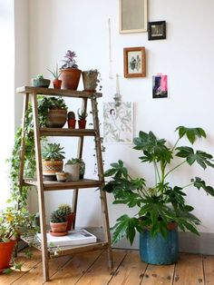 Fill each rung of a vintage ladder with succulents and trailing vines. You can really bring together a garden with a ladder. Pick up a weathered wood one or find something more industrial at a salvage shop.