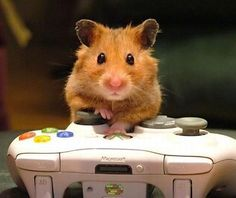 cute mouse | Mouse playing Xbox 360 | Funny Cute Stuff