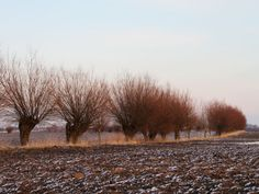 Country Road Country Roads, Snow, Outdoor, Art, Trelleborg, Outdoors, Art Background, Kunst, Outdoor Games