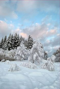 Snowy trees in sunset, Norway