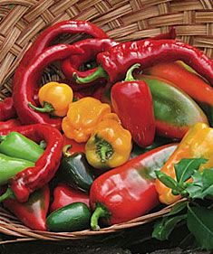 Growing and harvesting peppers