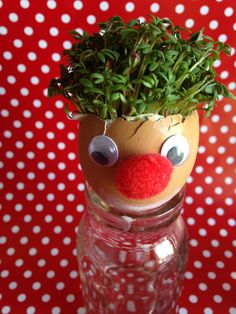 Growing Clown Cress Heads in an eggshell and bundles more fun activities www.thewobblyjelly.wordpress.com