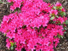 Bodnant gardens photography