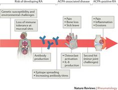 Stages in the development of seropositive rheumatoid arthritis.
