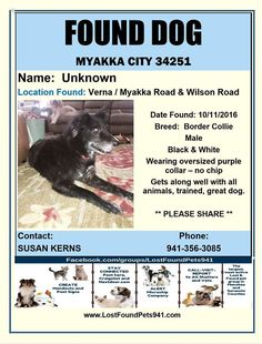 106 best lost found pets sarasota manatee county fl images on