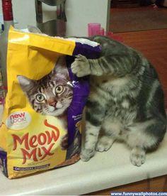 Meow Mix...