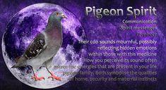 Spiritual Animal, Animal Spirit Guides, Power Animal, Spiritual Inspiration, Spiritual Awakening, Pigeon, Spirituality, Signs, Animals