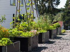 Moseplassen - livet i hagen Green Garden, Outdoor Structures, Plants, Design, Garden Ideas, Gardens, Outdoors, Diy, Inspiration