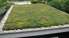 Mobiroof - in een handomdraai een groen dak