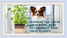 There are many articles floating around on the internet about what plants to grow inside your home to purify the…