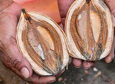 Babassu-olie hydrateert de huid mild zonder dat er een olie-achtige glans ontstaat. Heeft voedende eigenschappen en is rijk aan vitamine E.