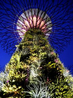 Gardens By The Bay, Singapore - Gardens by the Bay is, what I think, one of the most remarkable sights in Singapore. The main attraction here is the incredible Supertress which are a group of 25-50m vertical gardens in the shape of trees that come alive with lights and music at night and provide shade during the day.