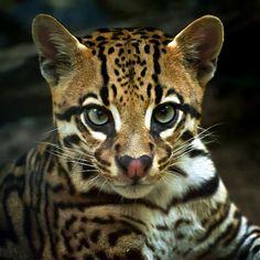 fierce & cute--can it be possible?