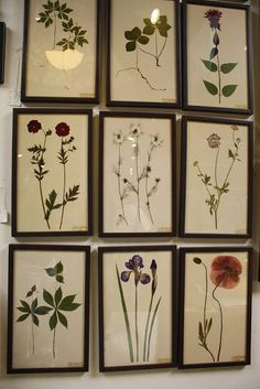 » Framed Pressed Flowers - I'd like to do this with floating frames