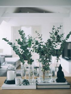 Eukalyptus-Weihnachtstische: 10 Ideen - Clem Around The Corner, Plantas Indoor, L Eucalyptus, Eucalyptus Centerpiece, Eucalyptus Garland, Eucalyptus Wedding, Small Bouquet, Deco Floral, Interior Decorating, Interior Design