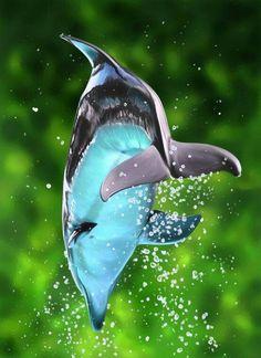 Dolphin,  jump for joy!