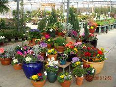 25 Best Garden Center Highlights Images