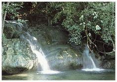 Krabi - Rain Forest day tour Krabi Rainforest Day Tour visit Khao pra bang khram widlife sanctuary, namtok ron khlong thom,sramorakot,wat tham suea for a forest-lover's trip