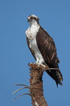 90 Best Backyard Birds Willamette Valley Oregon Images Backyard Birds Birds Willamette Valley