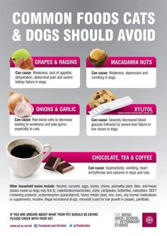 Dangerous foods for dogs