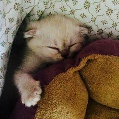 At the end of a long day, Taylor will make sure she's tucked in before bed. | 13 Reasons It's Great To Be Taylor Swift's Cat