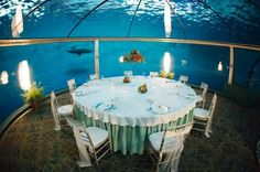 Gorgeous Table Setup For A Wedding In The Underwater Dolphin Dome At Indianapolis Zoo