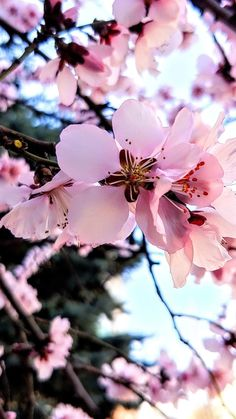 Colourful Wallpaper Iphone, Flower Phone Wallpaper, Wallpaper Backgrounds, Iphone Wallpaper, Beautiful Flowers Wallpapers, Beautiful Nature Wallpaper, Pretty Wallpapers, Cherry Blossom Wallpaper, Flower Aesthetic