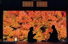 Serenity shared ...with the background of 160-year-old Enkianthus perulatus shrubs in Autumn color - at the Ankokuji Buddhist Temple in Toyooka, Hyogo, Japan (11/10/14 - The Asahi Shimbun/Getty Images)