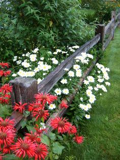 Split Rail fence with Bee Balm & Daisies Fence Landscaping, Backyard Fences, Pool Fence, Beautiful Gardens, Beautiful Flowers, Landscape Design, Garden Design, Fence Design, Split Rail Fence