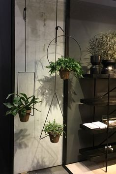 Hanging Plants - Hot Hov - Folly