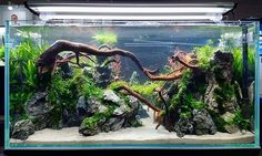 Aquascaping contest at CIPS Exhibition in Guangzhou, China. Fish Aquarium Decorations, Aquarium Setup, Aquarium Design, Betta Fish Tank, Aquarium Fish Tank, Planted Aquarium, Aquarium Aquascape, Cool Fish Tanks, Tropical Fish Tanks