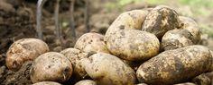 potatoes frozen