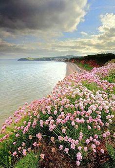beautymothernature:  Devon, England - Nat mother nature moments